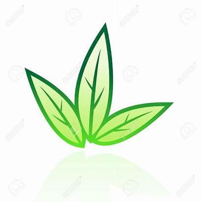 Leaf Tobacco Clip Clipart Rose Illustration Icon