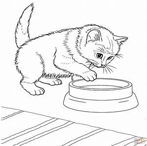 Javanese Kitten Coloring Page Free Printable Coloring Pages
