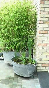 Graine De Gazon Pas Cher : bassine zinc galva deco jardin ~ Dailycaller-alerts.com Idées de Décoration