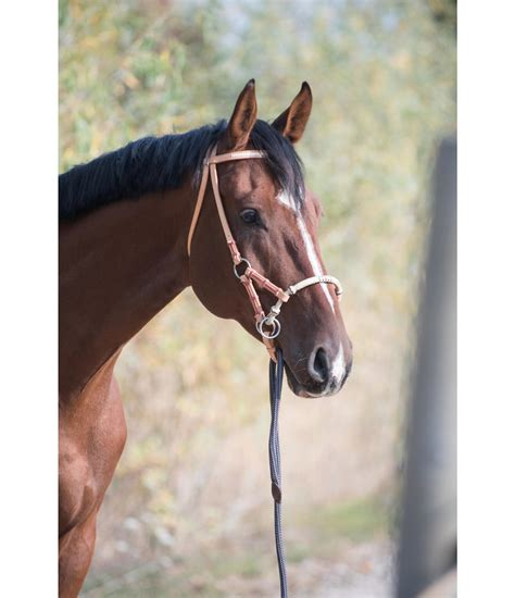sidepull bridle horse bitless rate bridles professional ha too much gross kraemer kramer they pferdesport