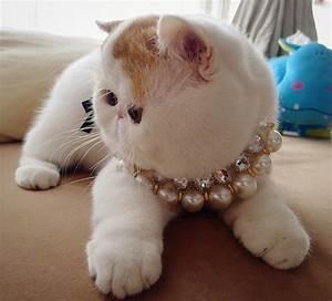 Snoopy the Cat (51 pics) – 1Funny.com