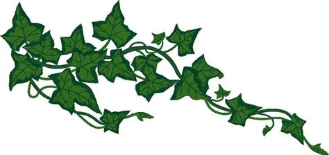 ivy clipart clipground