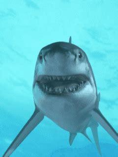 sharks animated gifs gifmania