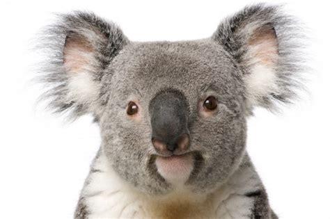 Animal Wallpapers Cool Pets Cute Animals Animal World