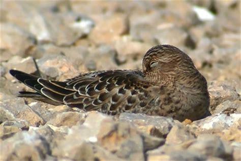 where do birds sleep the digiscoper birds and sleep