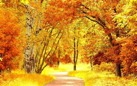 yellow orange fall foliage widescreen wallpaper wide