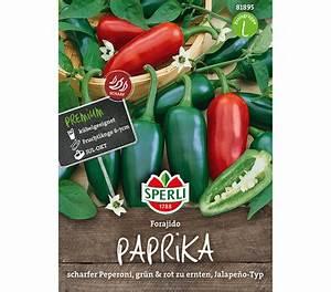 Paprika Pflanzen Pflege : sperli samen paprika 39 forjido 39 dehner garten center ~ Markanthonyermac.com Haus und Dekorationen