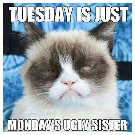 Tuesday Memes 18 - funny pictures gifs videos and memes humor pinterest grumpy cat laughter and humor