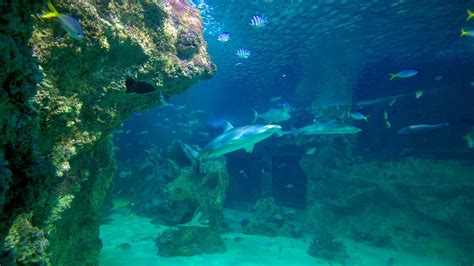 sea sydney aquarium sea sydney aquarium in sydney new south wales expedia