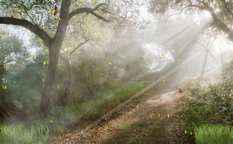 Forest Animated Wallpaper - light forest animated wallpaper desktopanimated