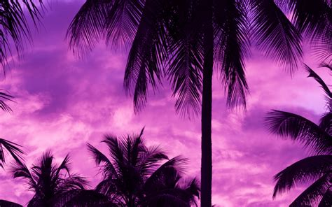 Purple Palm Trees HD Wallpapers - Wallpaper Cave