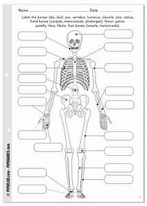 Label The Bones
