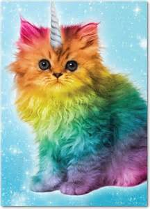 Rainbow Unicorn Kitty