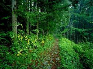 Its Cool Forest Roads