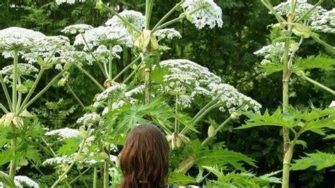 diese pflanzen sollte man nicht beruehren gesundheit