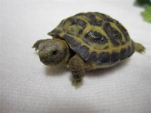Indiscriminate Postings: Russian Tortoise Soup