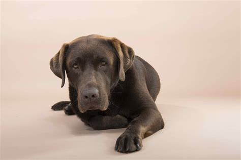 dog care conditions treatments symptoms nutrition