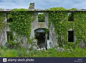 Haus Kaufen In Irland : aufgegeben verfallenes haus renovierungsbed rftig bedeckt mit efeu und andere kletterpflanzen ~ Orissabook.com Haus und Dekorationen
