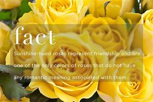 What Does The Color Of Roses Mean - Best Flowers and Rose 2017