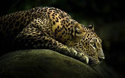 Gambar Keren Ukuran Besar Wallpapers Cheetah Dark