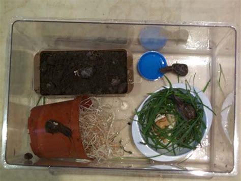 l 233 cole fait le tour du monde la maison des escargots