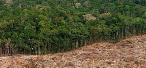 En Forêt D'amazonie, L'équivalent De Deux Mille Terrains