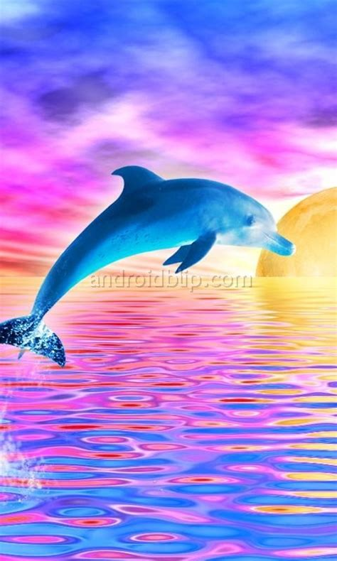 Animated Dolphin Wallpaper - animated dolphins images dolphinz