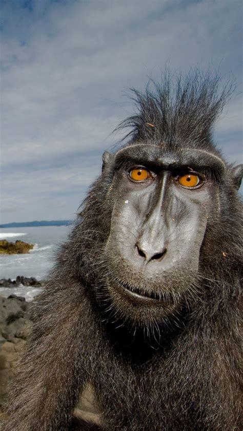 wallpaper baboon monkey cute animals funny animals