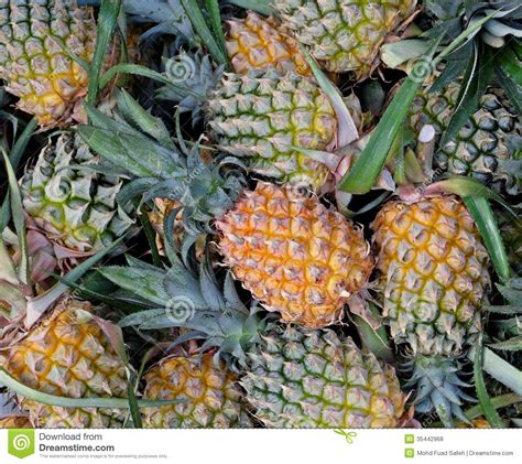 Pineapples Stock Photo Image Of Acidic Bromeliaceae