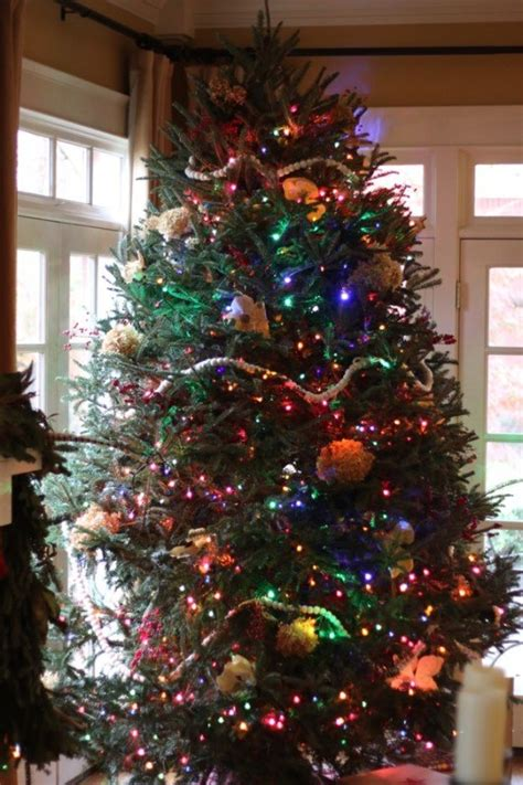 mixing white and colored lights on tree white lights or multicolored lights for your christmas tree