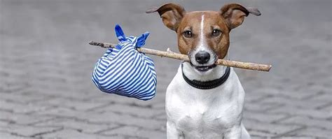 dog  lost peoria az arrowhead