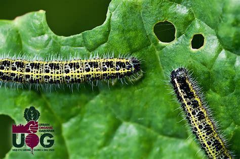garden pests  diseases garden ftempo