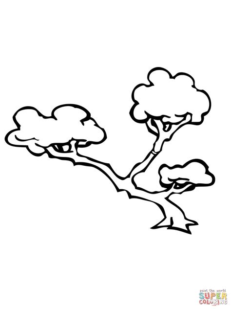 Acacia Tree Coloring Page Acacia Tree Coloring Page Coloring Pages