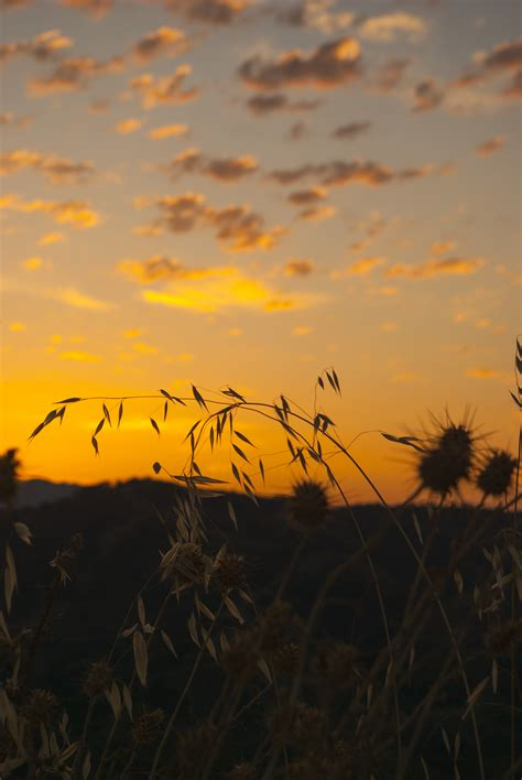 images landscape nature horizon silhouette