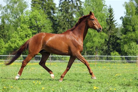 horse racing history long industry thoroughbred horses purebred mind fascinating