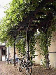 Pflanzen Für Pergola : pergola mit weinreben pergola pinterest inspiration pflanzen und training ~ Sanjose-hotels-ca.com Haus und Dekorationen