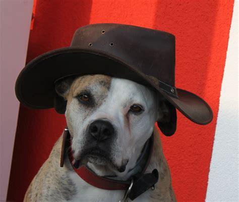 hundegeschichte musikvideo blog happy dog