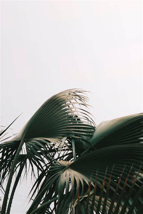 aesthetic minimalist new york iphone wallpaper