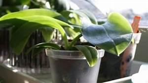 Orchidee Blüht Nicht Mehr : warum bl ht meine orchidee schon so lange nicht mehr 6 ~ Lizthompson.info Haus und Dekorationen