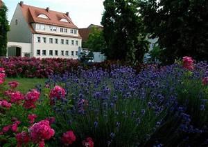 Rosen Und Lavendel : lavendula lavendel und rosen ~ Yasmunasinghe.com Haus und Dekorationen