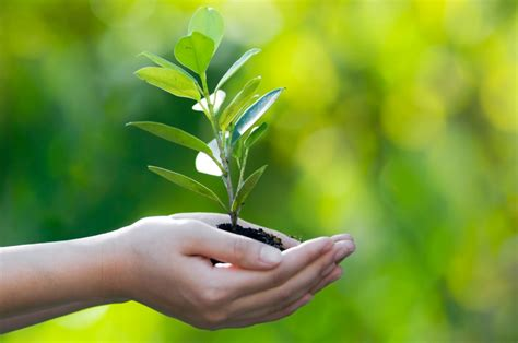 ENVIRONMENTAL SOLUTIONS AND CONSULTANCY
