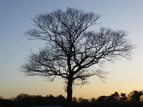 winter tree 3di philosophy