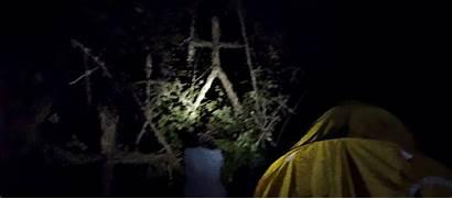 Blair Witch Film Reveal Woods Movies Imdb
