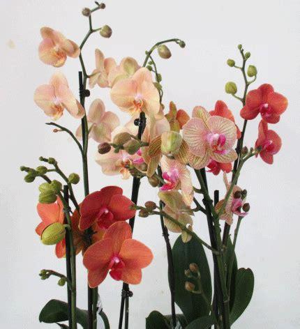 Garten Pflanzen Bern by Zimmerpflanzen Seite 5 Berner Blumenb 246 Rsen