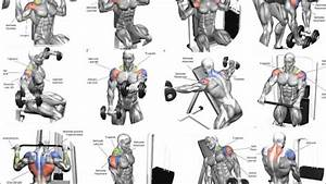Best Shoulder Building Exercises Chart Video