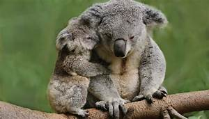 List of Marsupial Animals | Sciencing
