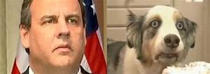 Christie and the Cupcake Dog