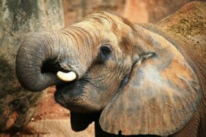 Moazu Kromah and the Case of the West African Ivory Cartel