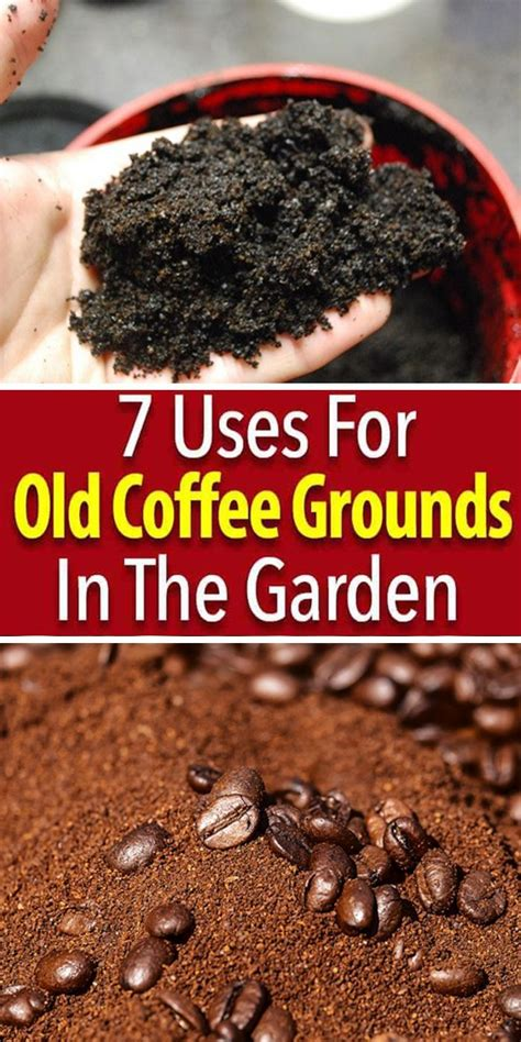 Remember, there are some people who need a coffee (or two) to get up and going everyday and their. How to Use Coffee Grounds in The Garden - 7 Ways (With images) | Coffee grounds, Uses for coffee ...