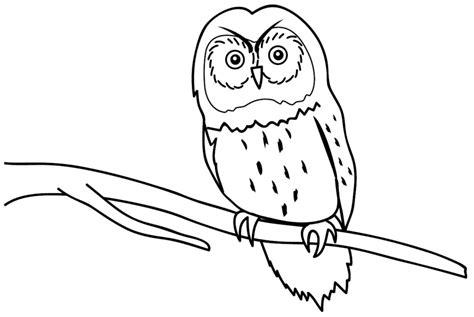 konsep 28 gambar hewan burung yang mudah
